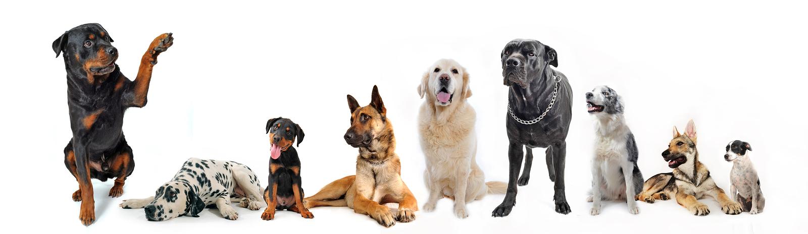Dog Obedience Recreation Programs Engage Dekalb Park District